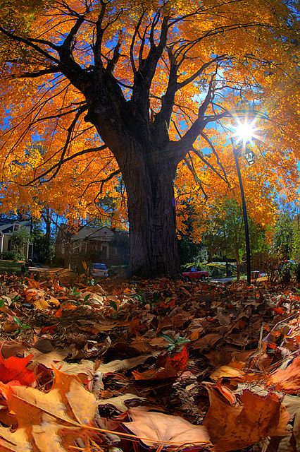 11) Fall in Dekalb County