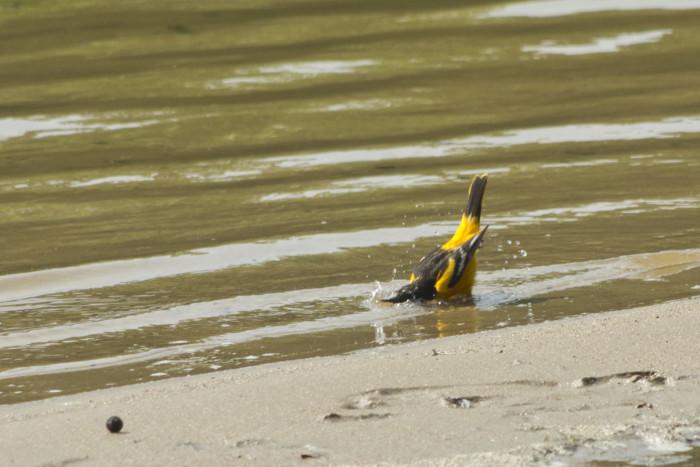 5. Lake Charles Bathing Bird
