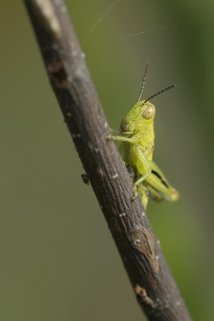 13. Lake Charles Bug