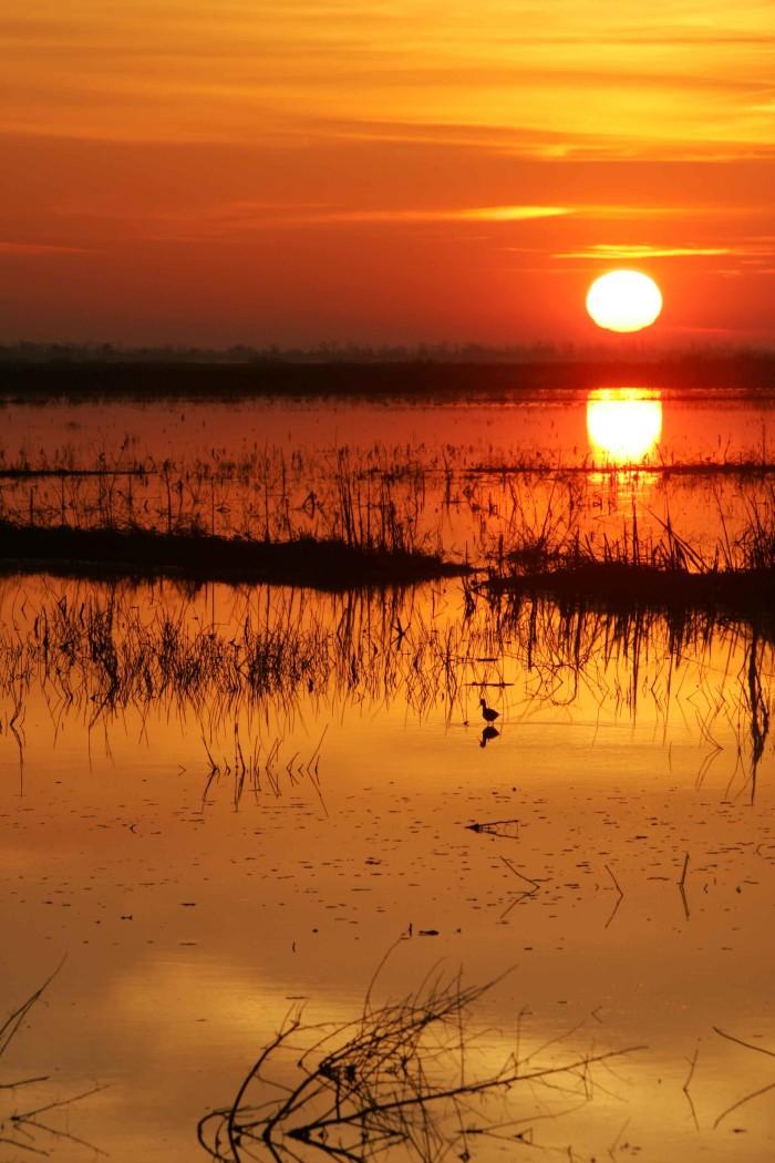 8) Blazing orange over the marsh.