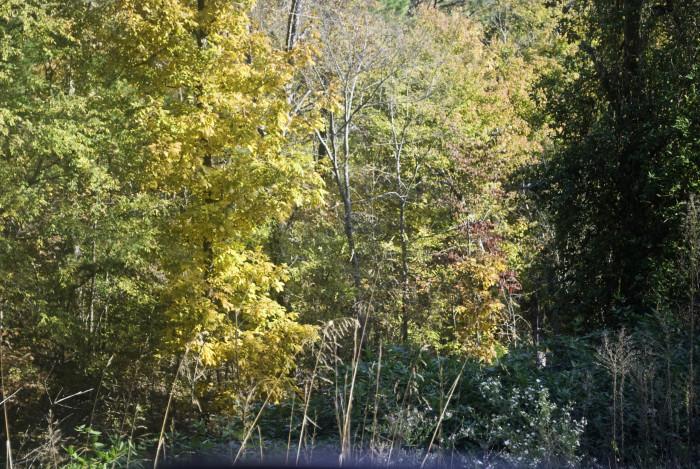 2. Mena Autumn Leaves