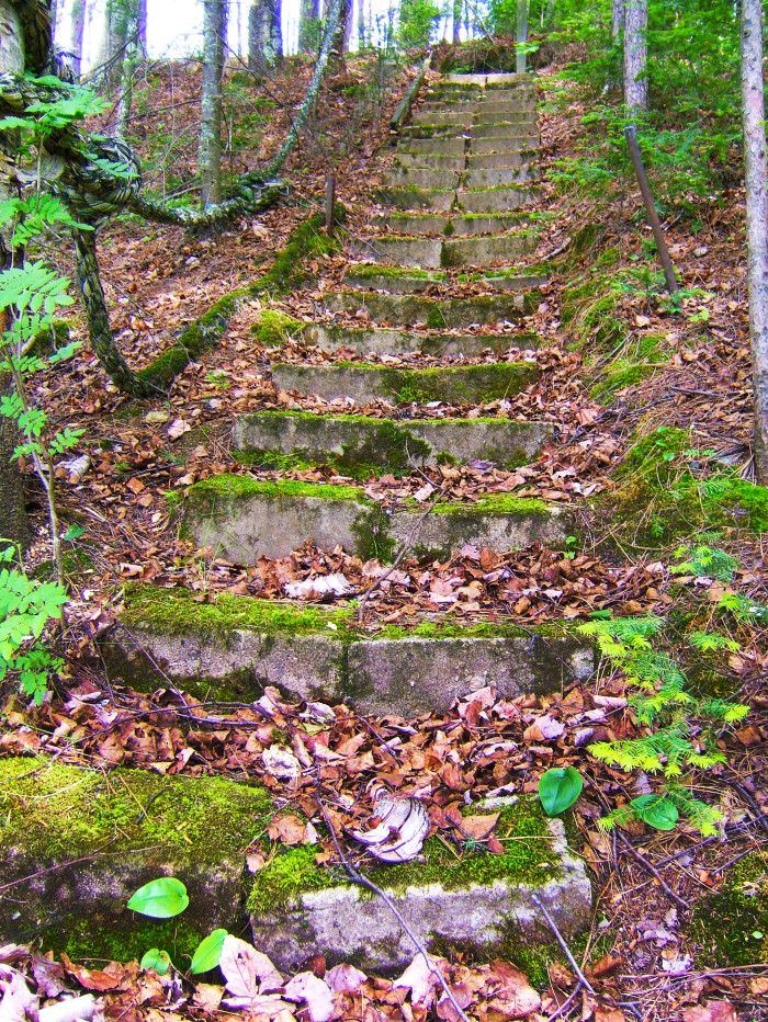 "7 These old stairs are a beautiful ""moss""terpiece."