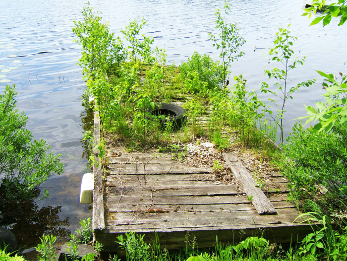 6 This dock has been left to float and grow some gorgeous greenery.