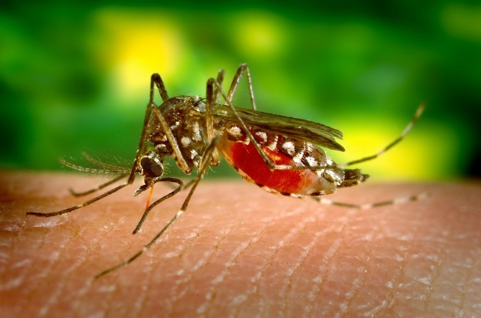 5. Mosquitoes