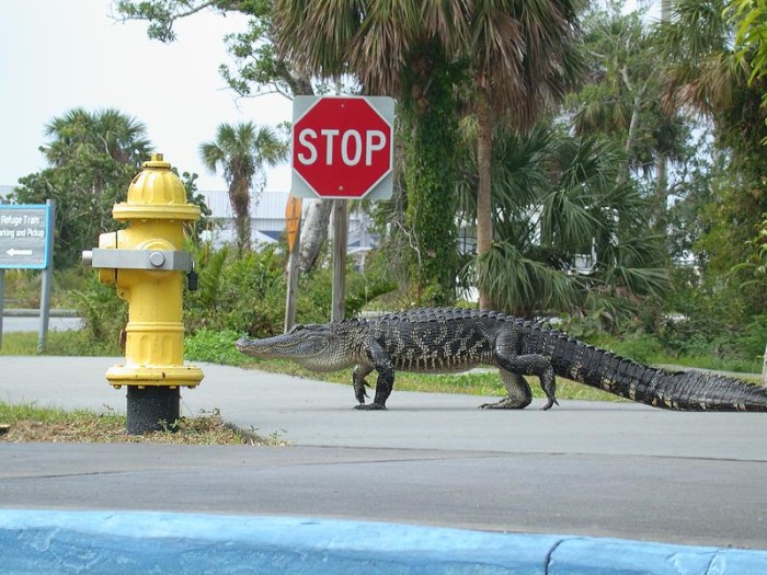 8) Alligators are not allowed to be tied to a fire hydrant in Detroit