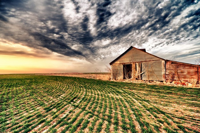 1.)  This lonely barn is standing amongst the wheat field right outside of town in Alva, OK.