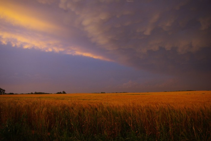 3. Hopeton, OK-Woods County: A few wheat fields under the storm clouds.