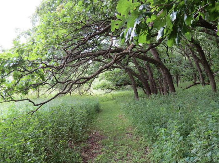 9) Olson Nature Preserve, Boone County