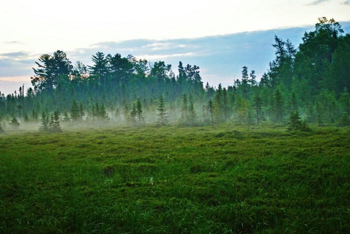 10. This bog fog is beautiful