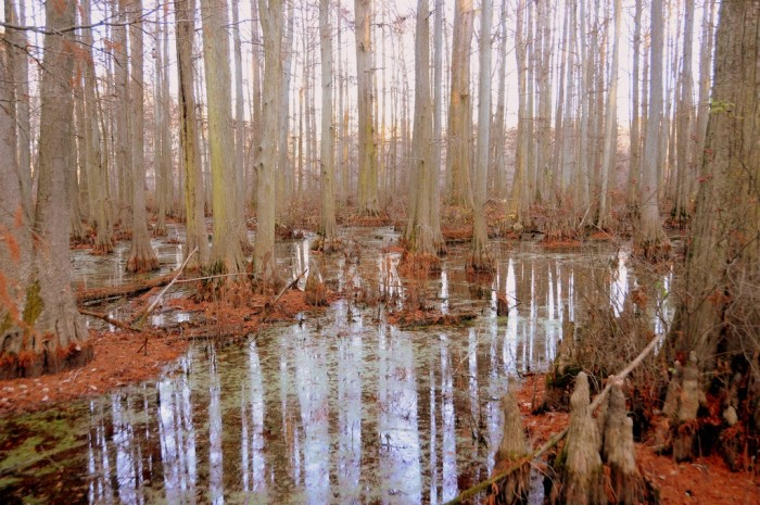 6. Awesome, magical swamp