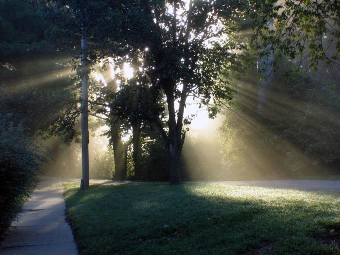 7. Love how magical these rays look in the fog