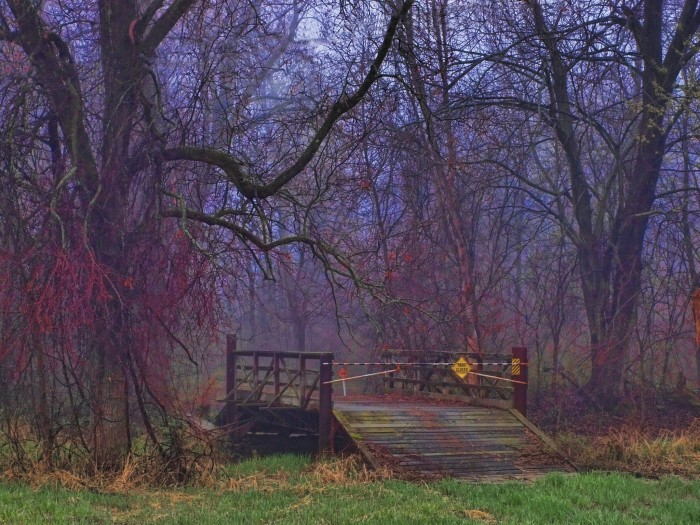 4. This forest looks so magical and eerie
