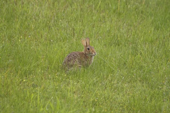 9. Rabbits