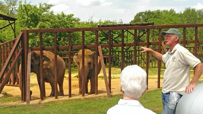 6. Retired circus elephants at Riddles Elephant Sancturary