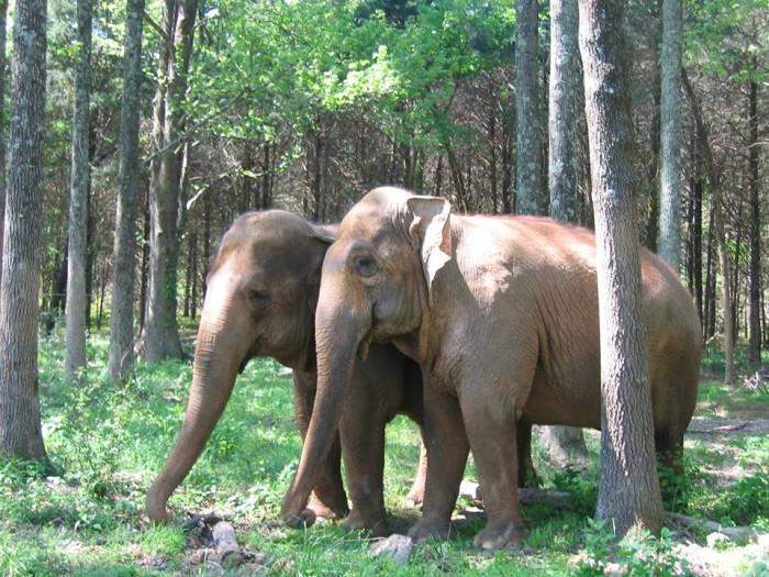 4. Elephant walk at Riddles Elephant Sanctuary