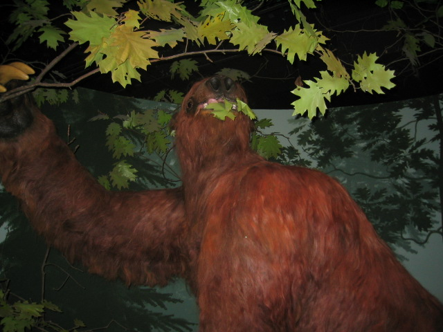 13. Iowa used to have giant sloths.