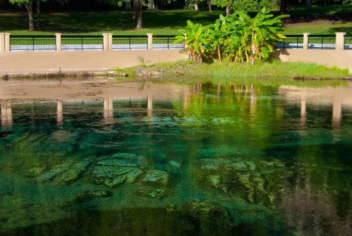 9. Salt Springs Recreation Area