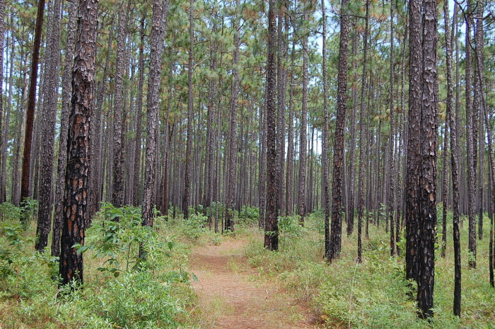9. Sumter National Forest, 20 Work Center Rd, Whitmire, SC 29178