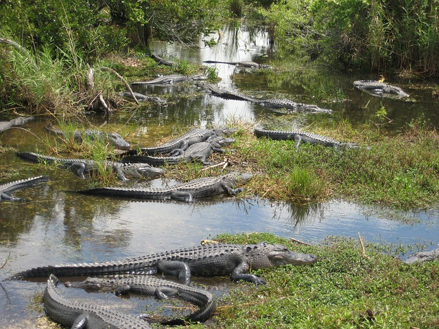 3. The Tamiami Trail through the Everglades, Big Cypress National Preserve and Ochopee will give you a taste of both the wild and touristy of Florida for an unforgettable trip.