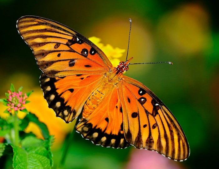 2. Butterfly at Wapanocca National Wildlife Refuge