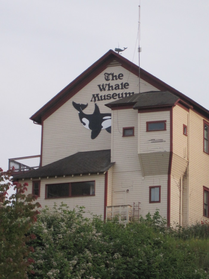 4. Animal lover  -   Whale Museum in Friday Harbor