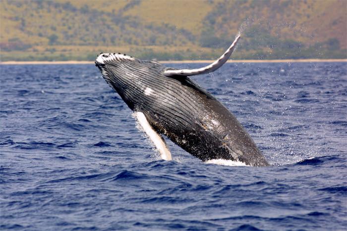 BONUS Bogus Law: Whale Fishing