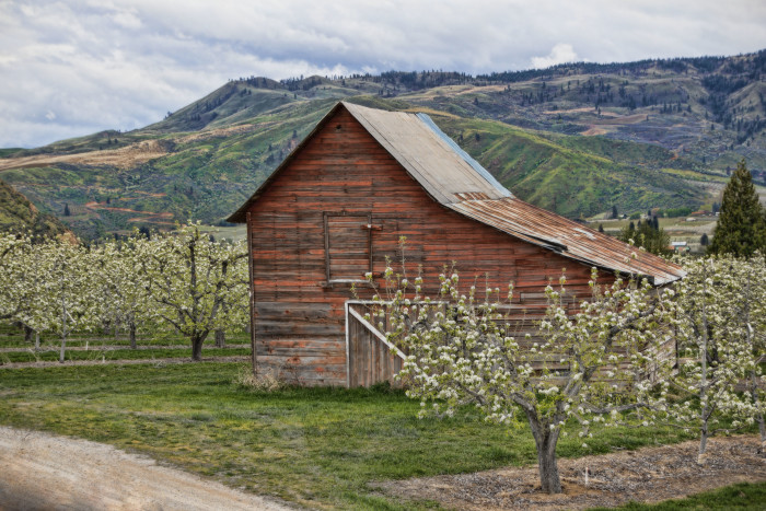 7.  This barn is nestled in the heart of apple country near Wenatchee!