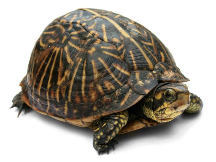 2. Turtle