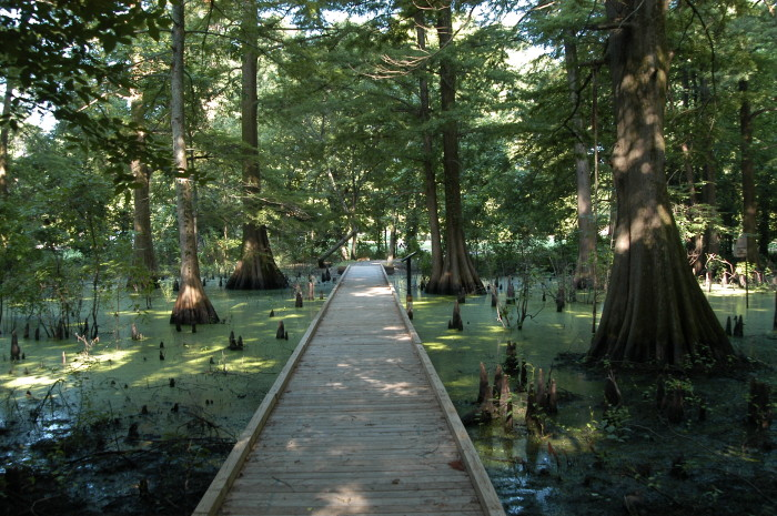 10. The Greenville Cypress Preserve is an ideal place for a stroll.