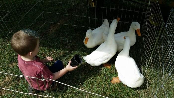 6. Chloe's Farm Friends Pet & Play