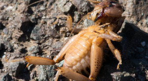 These 13 Creepy Bugs Found In Nevada Will Send Shivers Down Your Spine