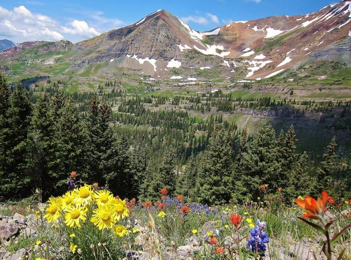 3.) Crested Butte Wildflower Festival (Crested Butte)