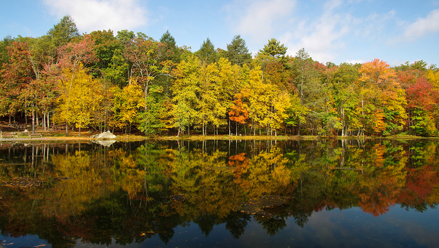 6. The fall foliage here is amazing.