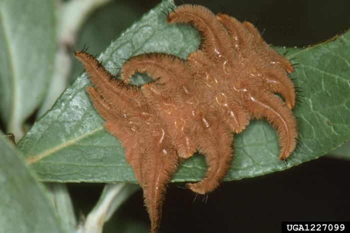 here are 10 terrifying gross bugs found in iowa