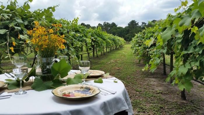 4. Rosa Fiorelli Winery & Vineyard