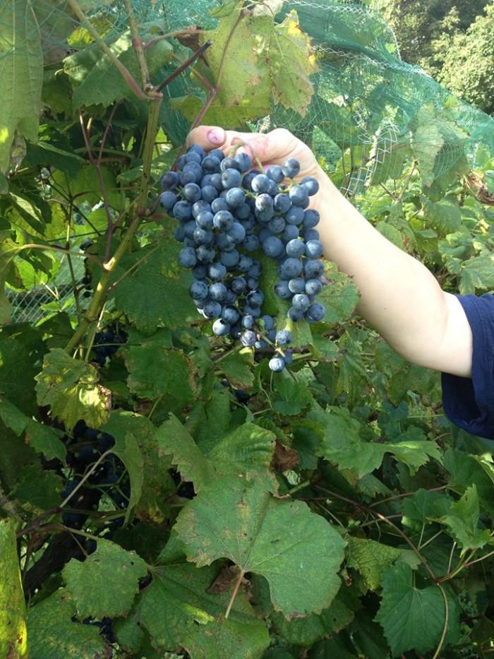 10. Hershey-Harrisburg Wine Country