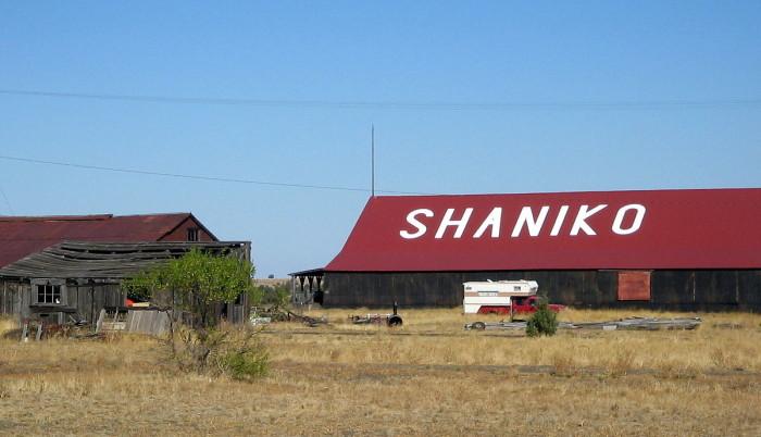10) Shaniko