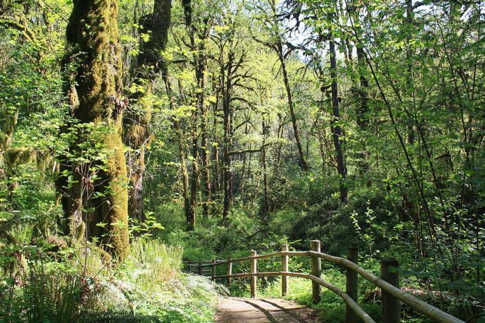 12) Cascadia State Park