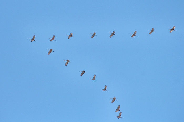 11. Where are those birds going anyway?