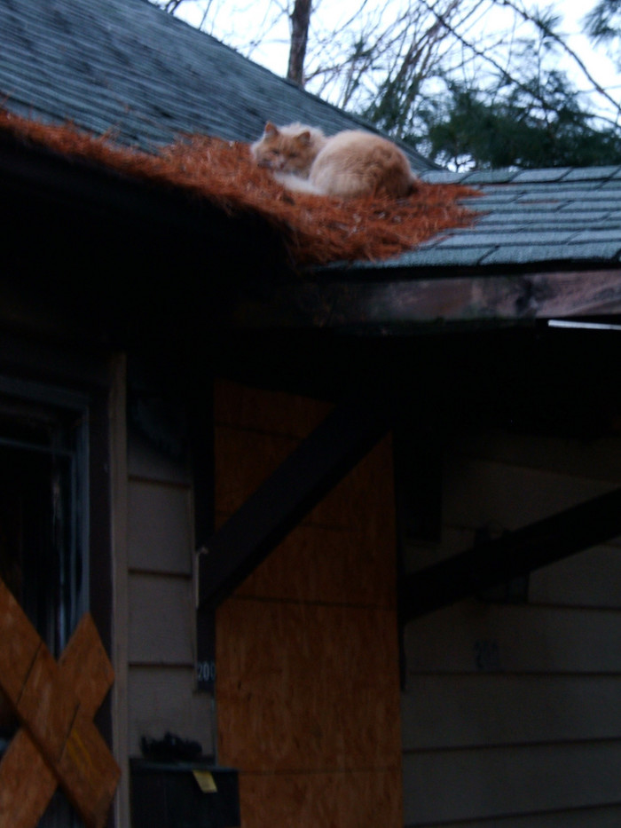13.  This cat has claimed this abandoned house in Columbia as his own.