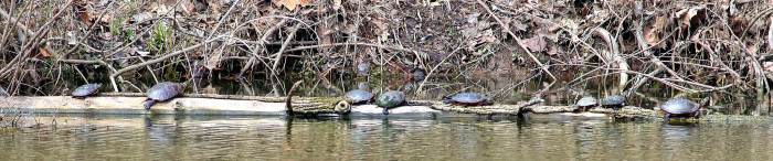 14. What are those turtles doing?!
