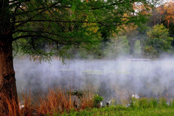 "5) ""Through the Mist"" in Tucker, Texas."