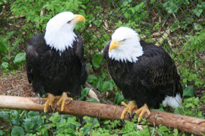 5) Alaska Raptor Center