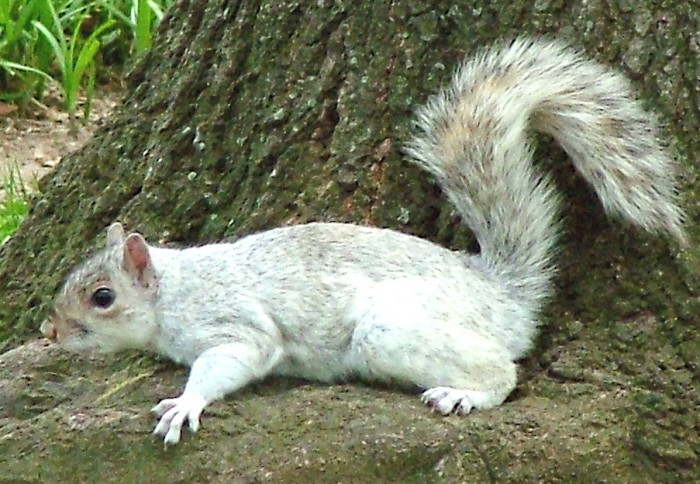 13. Getting excited after a spotting of Iowa State's unofficial mascot, the infamous and elusive white squirrel.