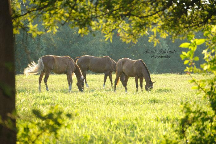 1. Horses can be a beautiful sight while riding through the country side.