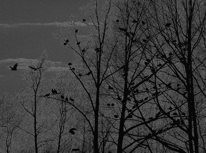 """15. This looks like a scene straight out of Alfred Hitchcock's """"The Birds."""""""
