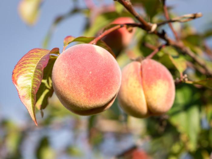 7) Peaches!