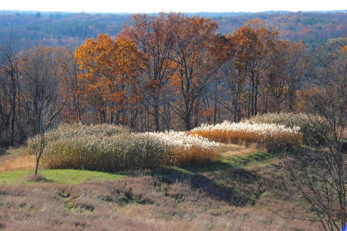 7) Radar Hill