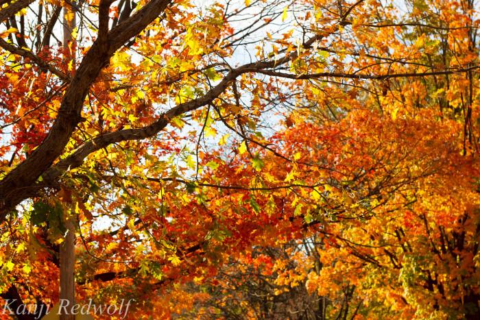 7.) Fabulous Fall