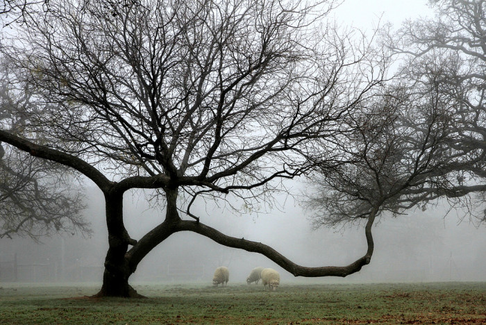6) A thick fog blankets the land at Nash Farm in Grapevine.